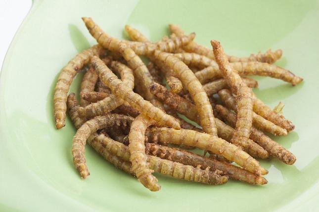 Meelwormen eten, durf jij het aan!?